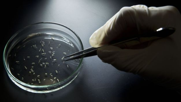 zika-mosquitos-virus-laboratorio-cnn
