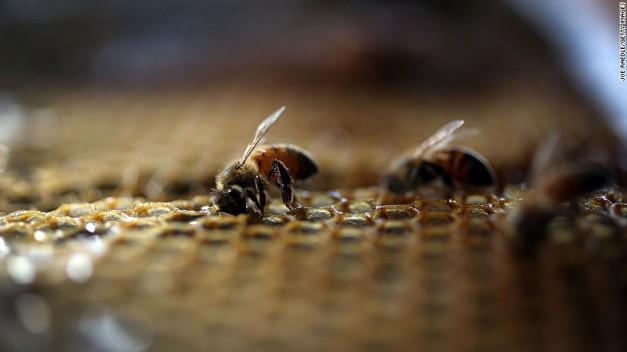 151130152742-honeybees-exlarge-169