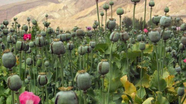 fotoopium.org_-640x360